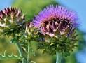 Quels sont les bienfaits des plantes ?