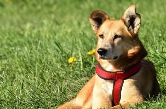 Quand et pourquoi contacter un vétérinaire ?