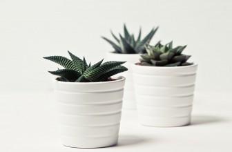 Quelle plante mettre à l'intérieur ?