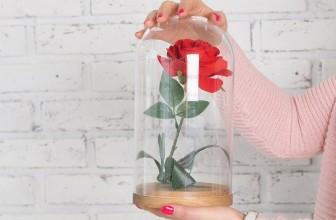 Pourquoi offrir une rose éternelle sous cloche ?