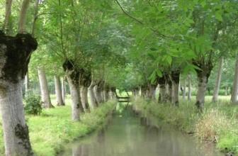 Déjà mille arbres pour sauver le paysage du Marais