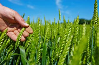 Physiostart : du démarrage à la récolte avec précision et efficacité