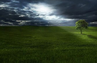 Formation, choisissez la voie environnementale