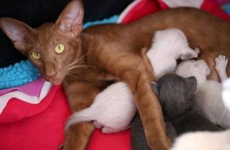 Quand changer la litière d'un chat?