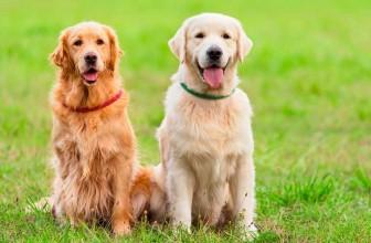 A quoi sert une clôture électrique pour chien ?