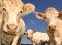 Métiers de l'agroalimentaire : des perspectives d'avenir