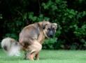 Diarrhée du chien : que faire?