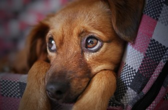 Quel budget mettre de côté pour l'achat d'un chien ?