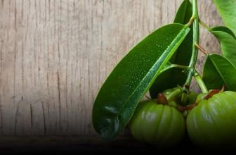Garcinia Cambogia : le fruit qui vous aide à ne plus grignoter