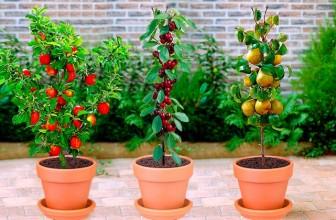 Comment bien choisir ses arbres fruitiers ?