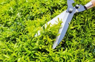 Jardin : quels outils de jardinage choisir et utiliser ?