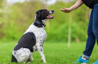 Pourquoi adopter le répulsif pour chien ?